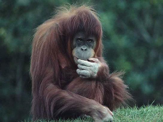 Maymun Cinsleri Nelerdir Maymungentr